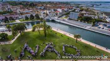 Manifesto em defesa do jardim do Rossio e património arbóreo de Aveiro - Notícias de Aveiro