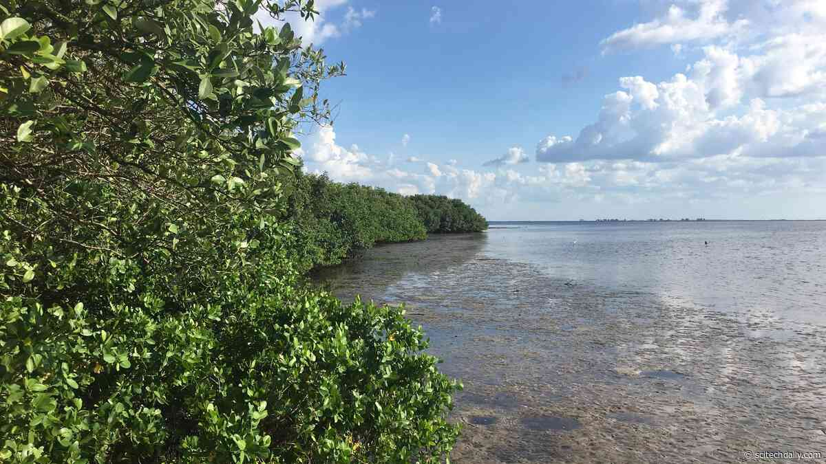 Mangroves – Valuable Coastal Ecosystems – Won't Survive Sea-Level Rise by 2050 if Emissions Aren't Cut