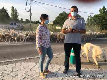 La Junta abona 300.000 euros en programas de sanidad animal en Jaén - HoraJaén