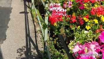 Zukunftswerkstatt Gaildorf: Die Blumenpracht der Stadt im Blick - SWP