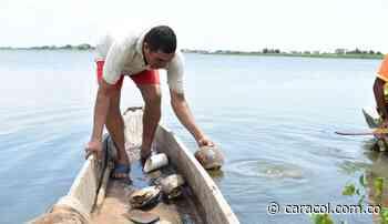 Pescadores de La Mojana: Guardianes de la Ciénaga Carbonero - Caracol Radio
