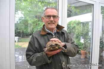 Ontsnapte schildpad is terecht en krijgt nieuwe naam, dankbaar baasje trekt meteen portefeuille open - Het Nieuwsblad