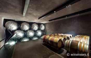 Terlano, il coraggio di osare, e di lanciare un vino bianco sul mercato, 13 anni dopo la vendemmia - WineNews