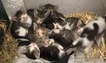 Cassano Magnago: trenta gatti randagi da sterilizzare - La Prealpina