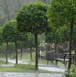 Agrarwetter: Vorübergehend herbstlich feucht und kühler | proplanta.de - Proplanta - Das Informationszentrum für die Landwirtschaft