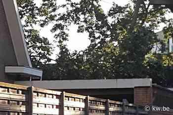 Boom valt op garage in Oostrozebeke - Krant van Westvlaanderen