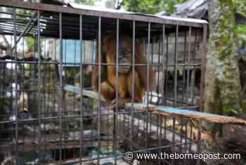 International 'End Wildlife Crime' initiative formed on World Environmental Day - The Borneo Post