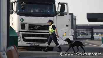 Loon-Plage: le chauffeur polonais transportait 86 kilos de têtes de plants de cannabis - La Voix du Nord