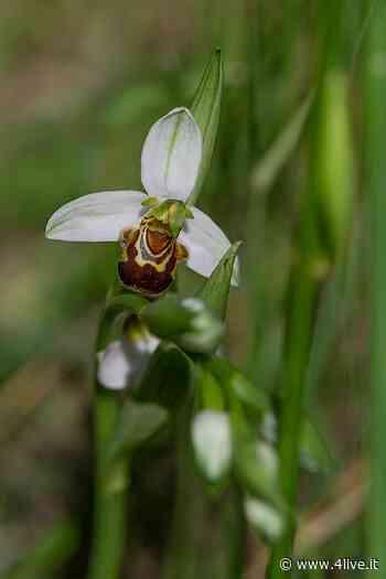 Dalla coltivazione alla nascita spontanea delle orchidee « 4live.it - 4live.it