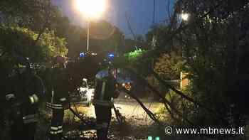 Piogge intense, crolla un grosso albero in via de Ponti ad Arcore - MBnews