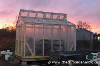 Glace Bay Food Bank's greenhouse is back thanks to volunteers, donation - TheChronicleHerald.ca