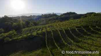 """Vino e Territorio: Asolo Prosecco lancia il """"cru"""" di collina - First&Food - First&Food"""