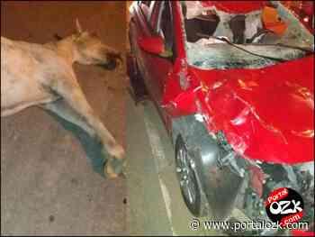 Veículo colide em animal solto na RJ216, em Campos dos Goytacazes; uma pessoa ferida - Portalozk.com