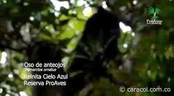 VIDEO: Oso de anteojos visto por primera vez en Reserva Natural - Caracol Radio