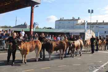 Evron : le festival de la viande 2020 se déroulera sur une journée - actu.fr