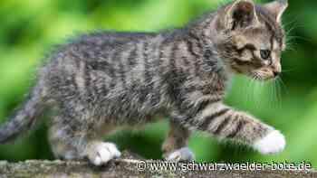Hornberg: Drei vergiftete Katzen zitternd gefunden - Schwarzwälder Bote