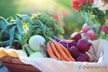 Market reboot: Vankleek Hill Farmers' Market re-opens Saturday, June 20 in a new location, with new rules - The Review Newspaper