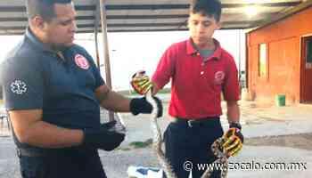 Capturan víboras dentro de Zaragoza [Coahuila] - 07/06/2020 - Periódico Zócalo