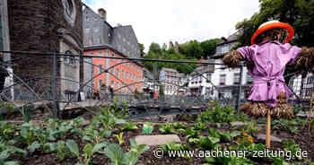 Salat, Kohl und Rhabarber: Ein gut bewachter Stadtgarten in Monschau - Aachener Zeitung
