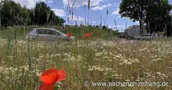 Langgraswiesen in Herzogenrath: 27.000 Quadratmeter für Bienen und Co - Aachener Zeitung