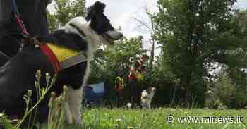 Borgo San Lorenzo, i cani da soccorso tornano ad allenarsi - TGR Toscana - TGR – Rai