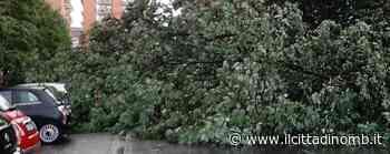 Maltempo a Paderno Dugnano: a Palazzolo grosso albero crolla sulle auto in sosta - VIDEO - Il Cittadino di Monza e Brianza