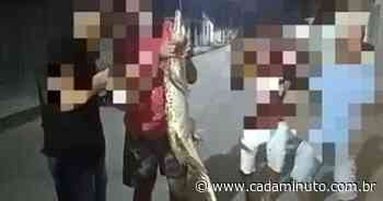 Seis pessoas são autuadas por maus tratos a animal em Pilar - - Cada Minuto