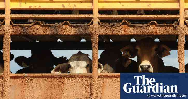 Australian government considers appealing against judgment on 2011 live cattle export ban