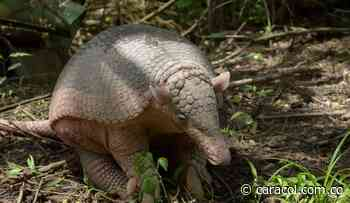 Decenas de animales silvestres han muerto en la vía Pereira - Cerritos - Caracol Radio
