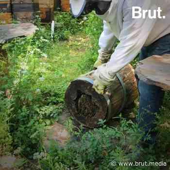 Les paniers de Chelles : pendant le confinement ces producteurs et commerçants se sont regroupés - Brut.