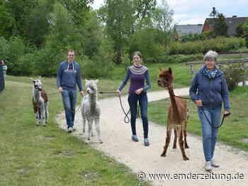 Alpakas auf Entdeckungstour in Bunde - Emder Zeitung