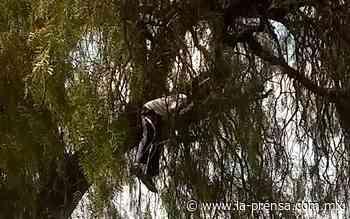 Lo encuentran sin vida sobre un árbol en Zumpango - La Prensa