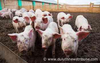 Daniel Neman column: The line between meat, veggies leads to label spat - Duluth News Tribune