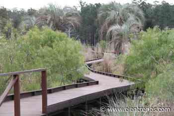 Sustituirán el eucaliptus por especies nativas, en un proyecto de reforestación de 70 hectáreas - Elentrerios.com