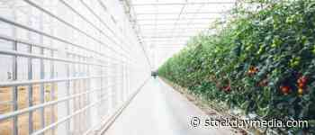 The Green Organic Dutchman Receives Health Canada Licence Amendment for Valleyfield Hybrid Greenhouse - Stock Day Media