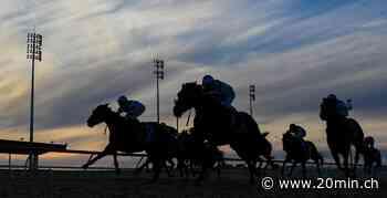 Rekordurteil im Pferdesport – Reiter 20 Jahre gesperrt - 20 Minuten