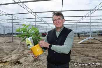 Oprins Plant bouwt nieuwe serres en verhuist productie naar Rijkevorsel - Gazet van Antwerpen