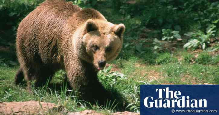 French government to launch legal action against bear killers