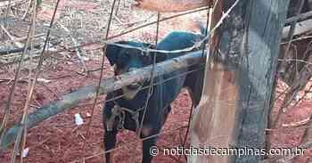 Mulher e detida por maus-tratos a animais em Jarinu - Notícias de Campinas