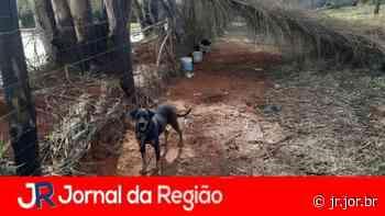 Moradora de Jarinu multada em R$ 9 mil por maus tratos   JORNAL DA REGIÃO - JORNAL DA REGIÃO - JUNDIAÍ