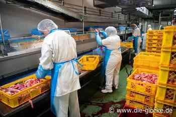 Zwölf Schlachthof-Mitarbeiter aus Oelde infiziert - Die Glocke online
