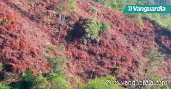 Quemas y talas forestales generan alarma en Oiba - Vanguardia