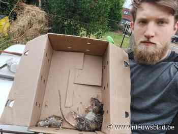 """Buurt kampt na rattenplaag na aanleg nieuwe wijk: """"Ik vang er elke dag één"""""""