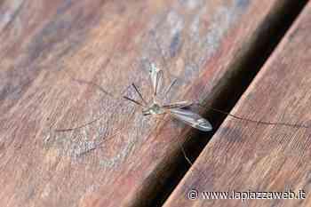Zanzare, disinfestazioni al via a Saonara - La PiazzaWeb - La Piazza