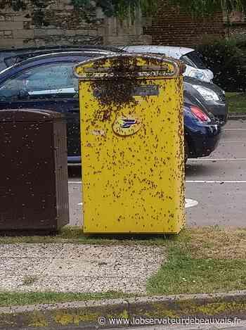 Jouy-sous-Thelle : un essaim d'abeilles impressionnant recouvre une boîte aux lettres | L'Observateur de Beauvais - L'observateur de Beauvais