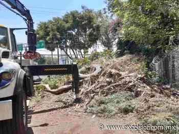 Sacan gran cantidad de basura de río San Buenaventura - Periódico Excélsior