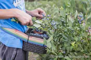Love you berry much! Blaubeeren sind die Aufsteiger des Jahres - food-monitor