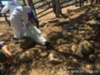 Campesino asesinado en Baraya • La Nación - La Nación.com.co
