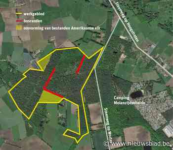 Groot naaldbos in Kolonie gaat voor de bijl om plaats te maken voor gemengd bos