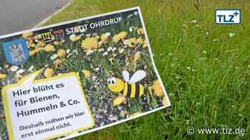 Ohrdruf bietet Insekten jetzt mehr Nahrung - Thüringische Landeszeitung